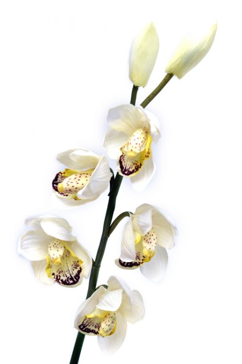 Real Touch Artificial Cymbidium Orchid Stems that look and feel real. Choose your colours.