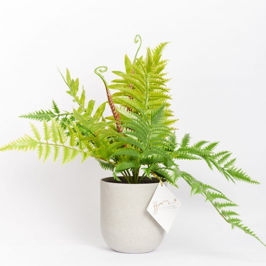 Calista Real Touch Forever Flowering Fern Plant 2